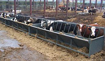Penderfeed Livestock Equipment Duns Scottish Borders Cattle