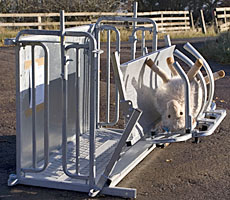 Penderfeed Livestock Equipment, Duns, Scottish Borders: Sheep